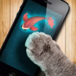 Fish game toy for cats MOD APK Unlimited Money